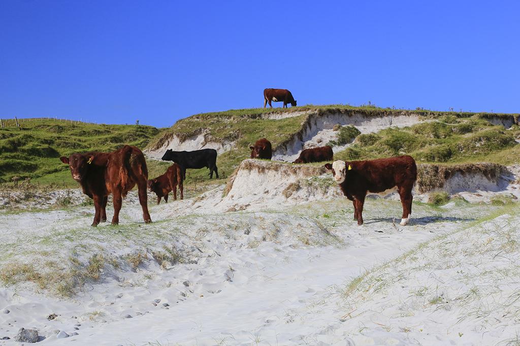 Region Isle of Barra