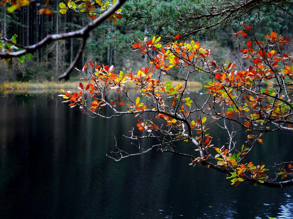 Activity Dalbeattie Forest