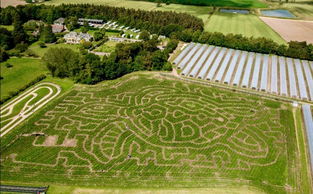 Activity Cairnie Fruit Farm & Mega Maze