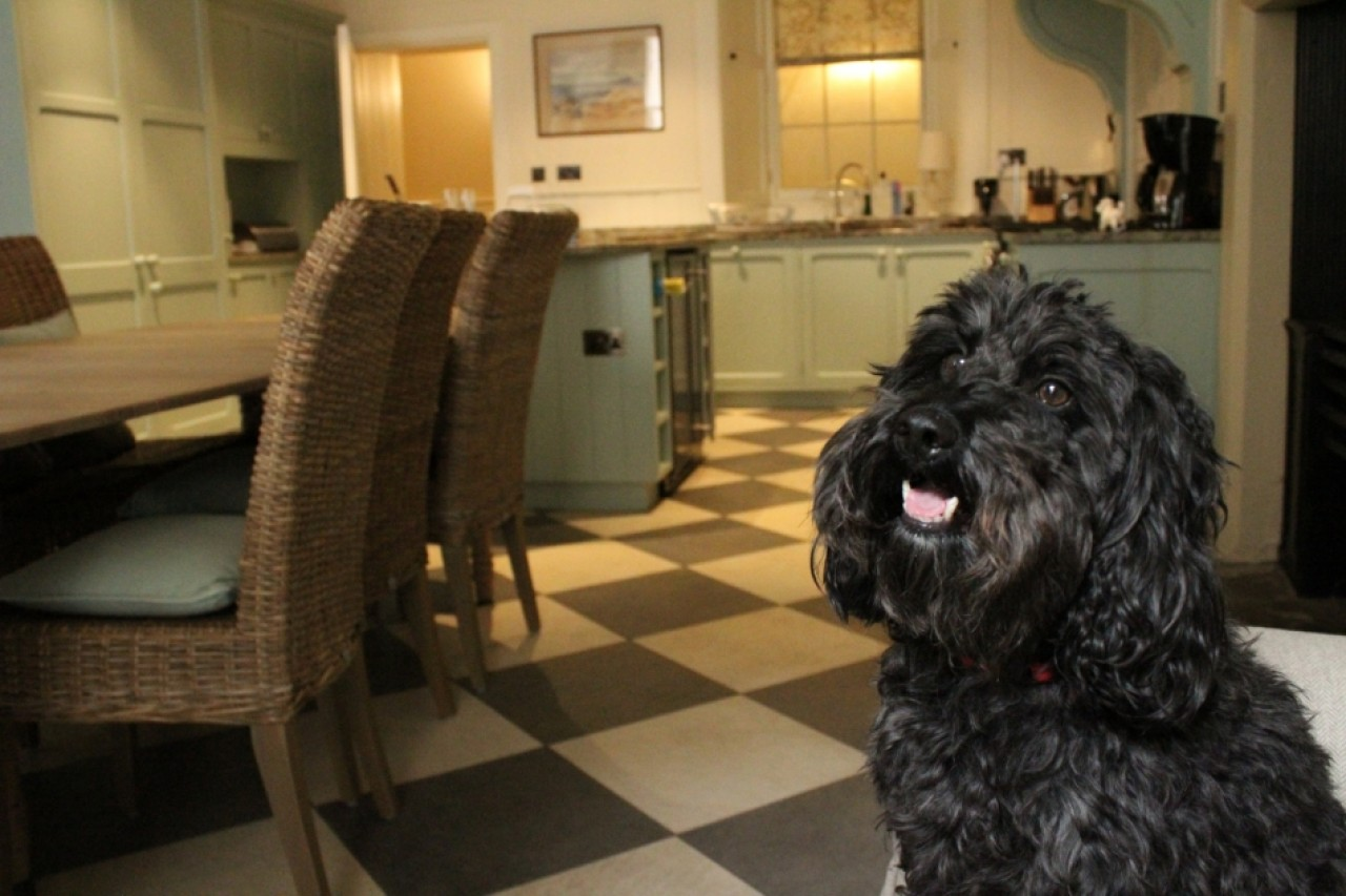 Stay at Abbotsford, Dog friendly