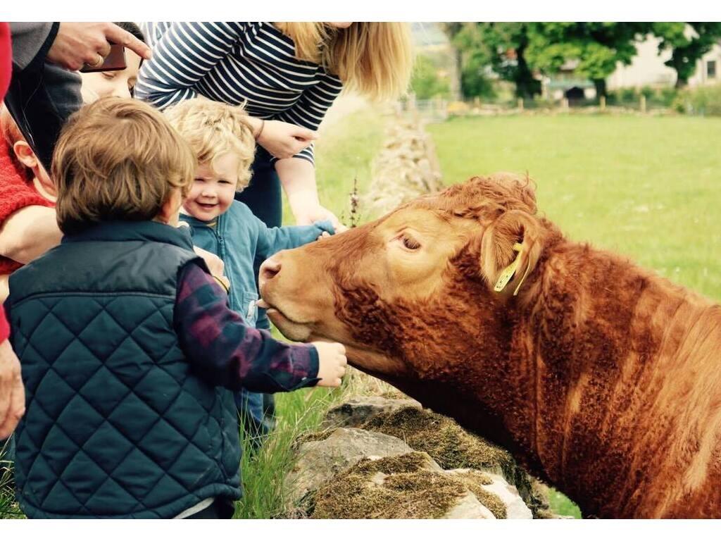 Activity Newton Farm Tours